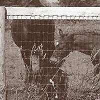 12.5 2X4X48X100 Horse Fence C1 By Keystone Wire + [